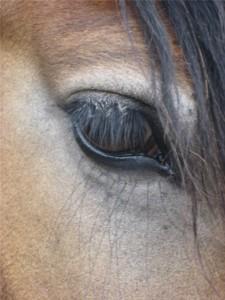 Ronja oog