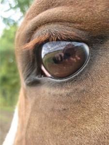 Safari oog