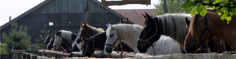 Ruitercentrum het Fjordenpaard
