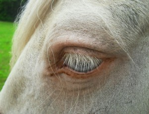 bibi oog
