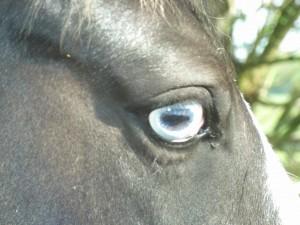 ster oog