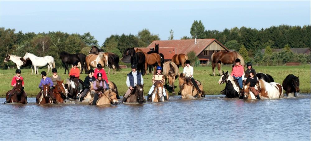 zelfs paarden zonder ruiter gaan mee het water in